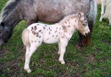 Underwoods Bee Spotted For Glory - 2010 Colt