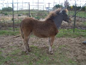 Star Bey Bee - 2008 Filly For Sale